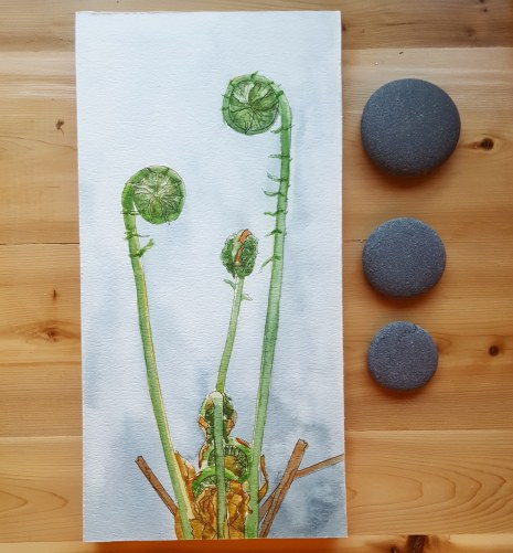 """6""""x12"""" Fiddleheads - Available"""