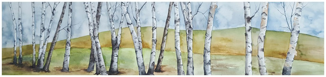 22 birches w border