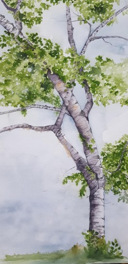"Kennebunk Birch - 10""x20"" Original Watercolor"