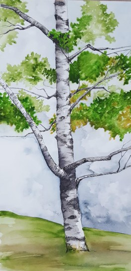 "Quechee Birch - 10""x20"" Original Watercolor Mounted on Wood Panel"